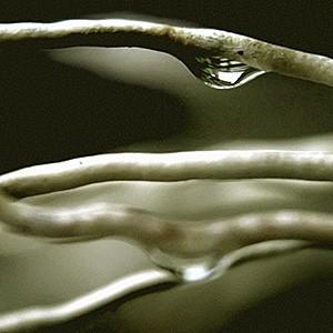 Detalle de gota de agua resbalando por una hoja